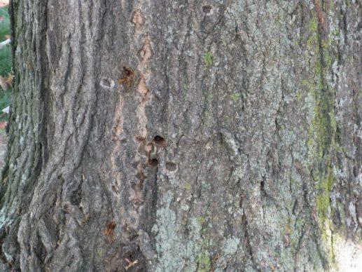 Charleston Tree Experts
